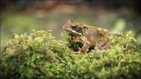 Little Frog by Kilmas