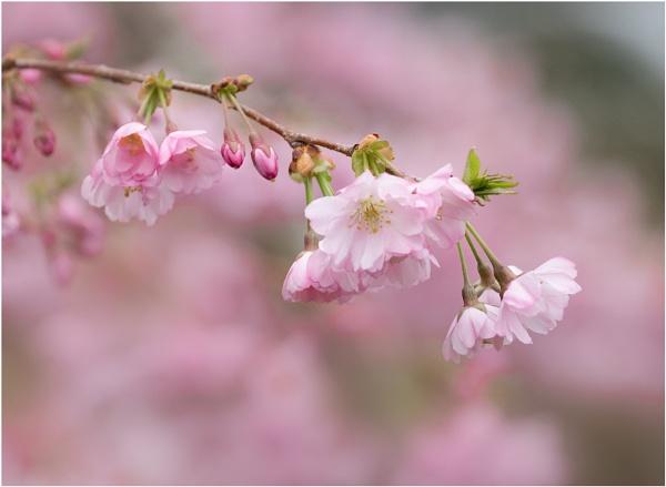 Blossom by capto