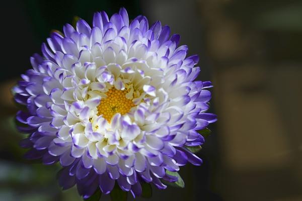 Asda bloom by deavilin