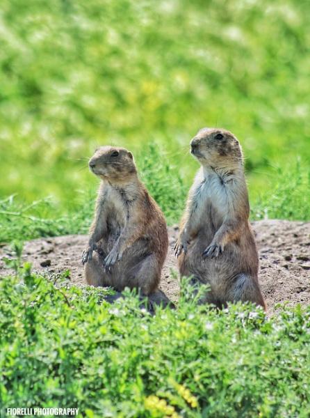 Prairie Dog Community Members by Lfiorelli88