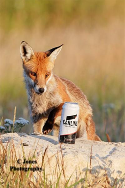 Mr Fox with a beverage.  ( enjoy Mr Fox ) by cjones