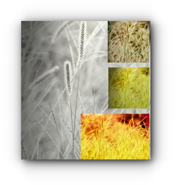 Summer Grass by LoryC