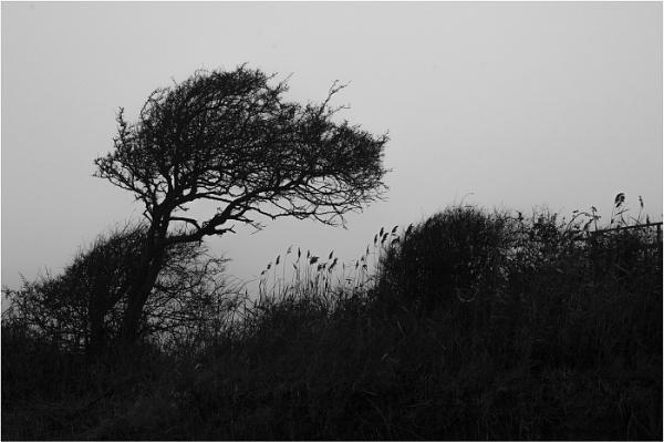 Windswept by AlfieK