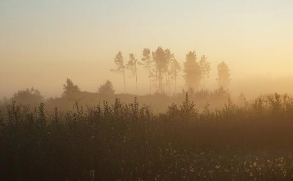 Trees in a fog by SauliusR