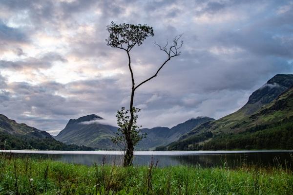 "Buttermere\'s \""Lone Tree\"" at daybreak by newbiek50user"