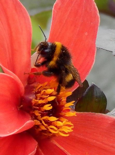 bee bee bee by KieranW