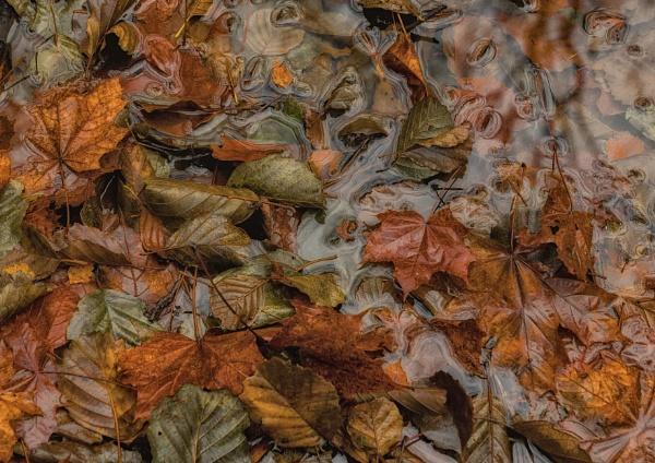 Autumn Leaves by Leikon