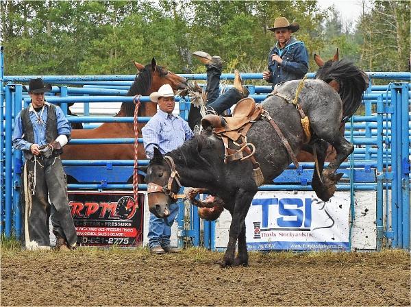 Horse 1    Cowboy 0 by MalcolmM