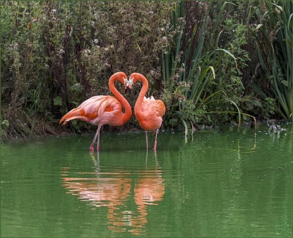 Flamingo Love Hearts by AnnetteK