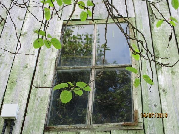 Window... by 100_per_cent_organic
