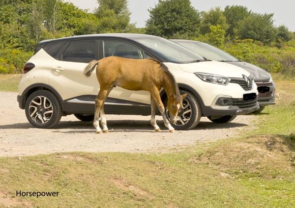 Horsepower by daffodil555