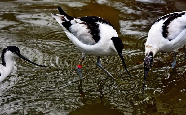 Stick  ones  beak  in by oldham