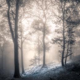 Brandelhow Woods