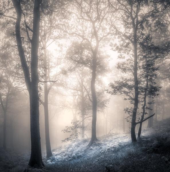 Brandelhow Woods by Mike43