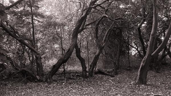 SPOOKY TREES. by kojack