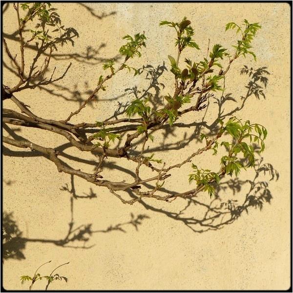 springstill branch by FabioKeiner