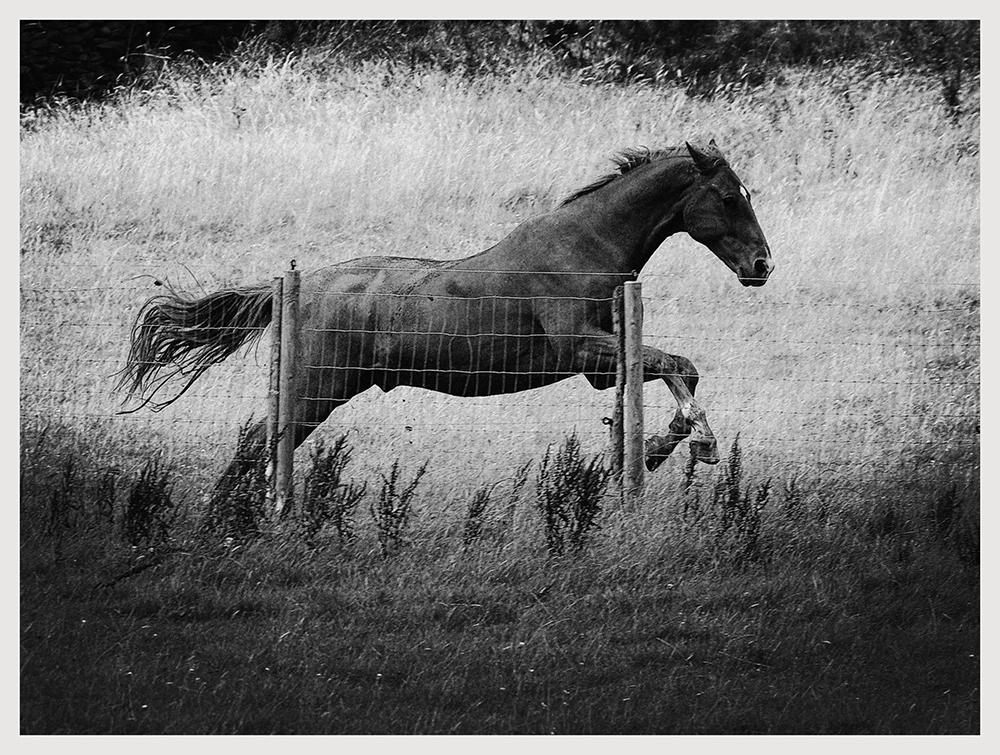 Horse Study IX