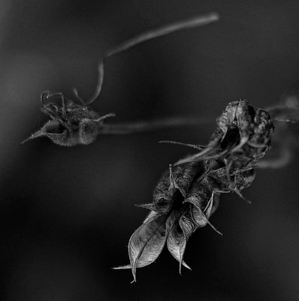 Hunters by Mollycat