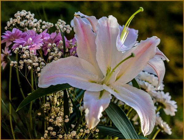 waning lily... by estonian