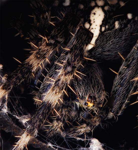 Garden Spider.... by Dave_Henderson