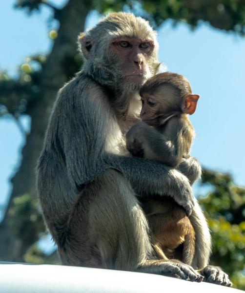 Longleat Monkey by lost_in_colour