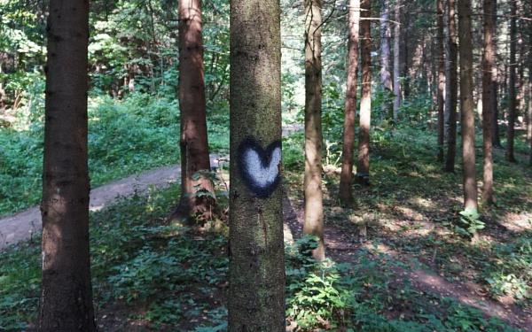 Graffiti in the woods by SauliusR
