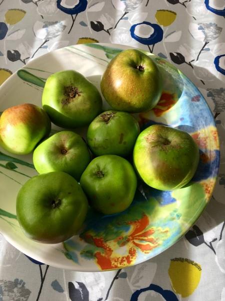 Bradley Apples. by Pinarellopete