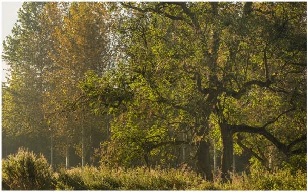 Autumn Dawns by JelFish