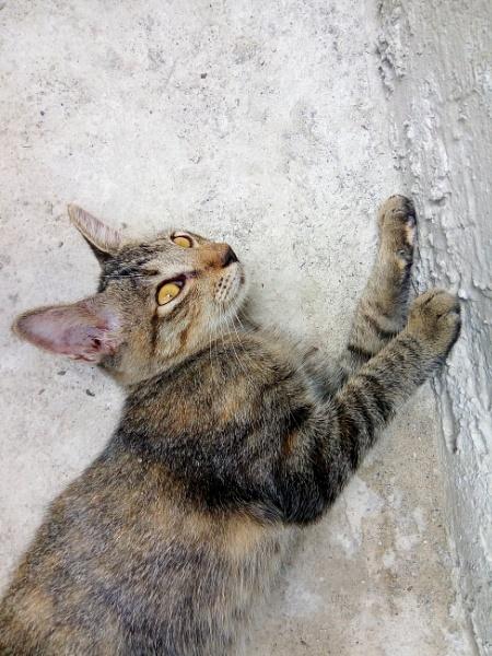 Stripped Cat by jkrix