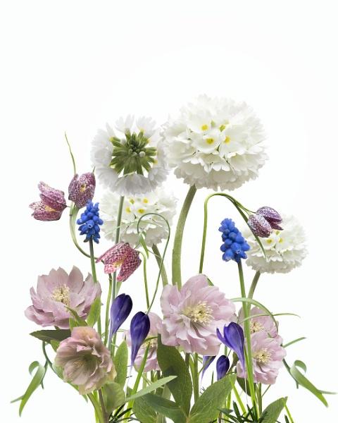 Flower Garden by swilliams71