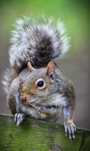 Cute Little Squirrel by JBinthesunPhoto