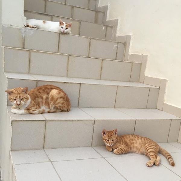 Three Cats by martin174