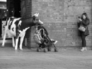 A street cow named Desire by Robal
