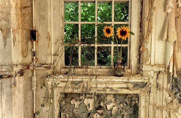 Sun Flowers by Buffalo_Tom