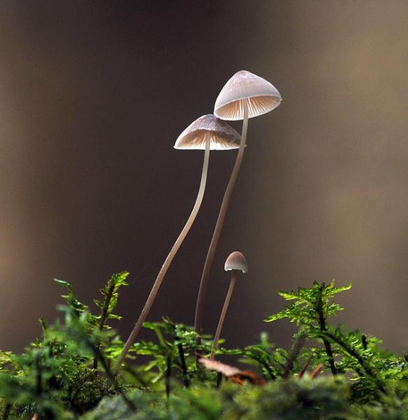Three Mushrooms by viscostatic