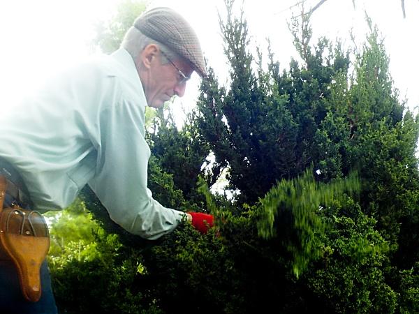 GIVING A TREE A HAIR-CUT by TimothyDMorton