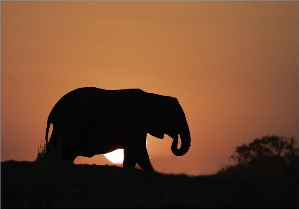 Botswana sunset by esoxlucius