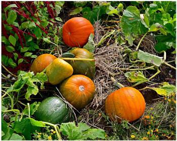 """""""Pumpkin Time"""""""