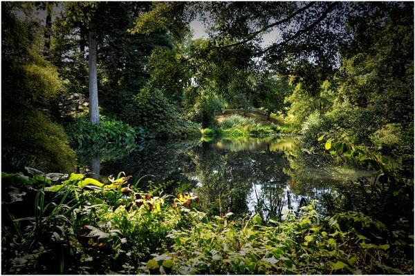 Woodland Pool by PhilT2