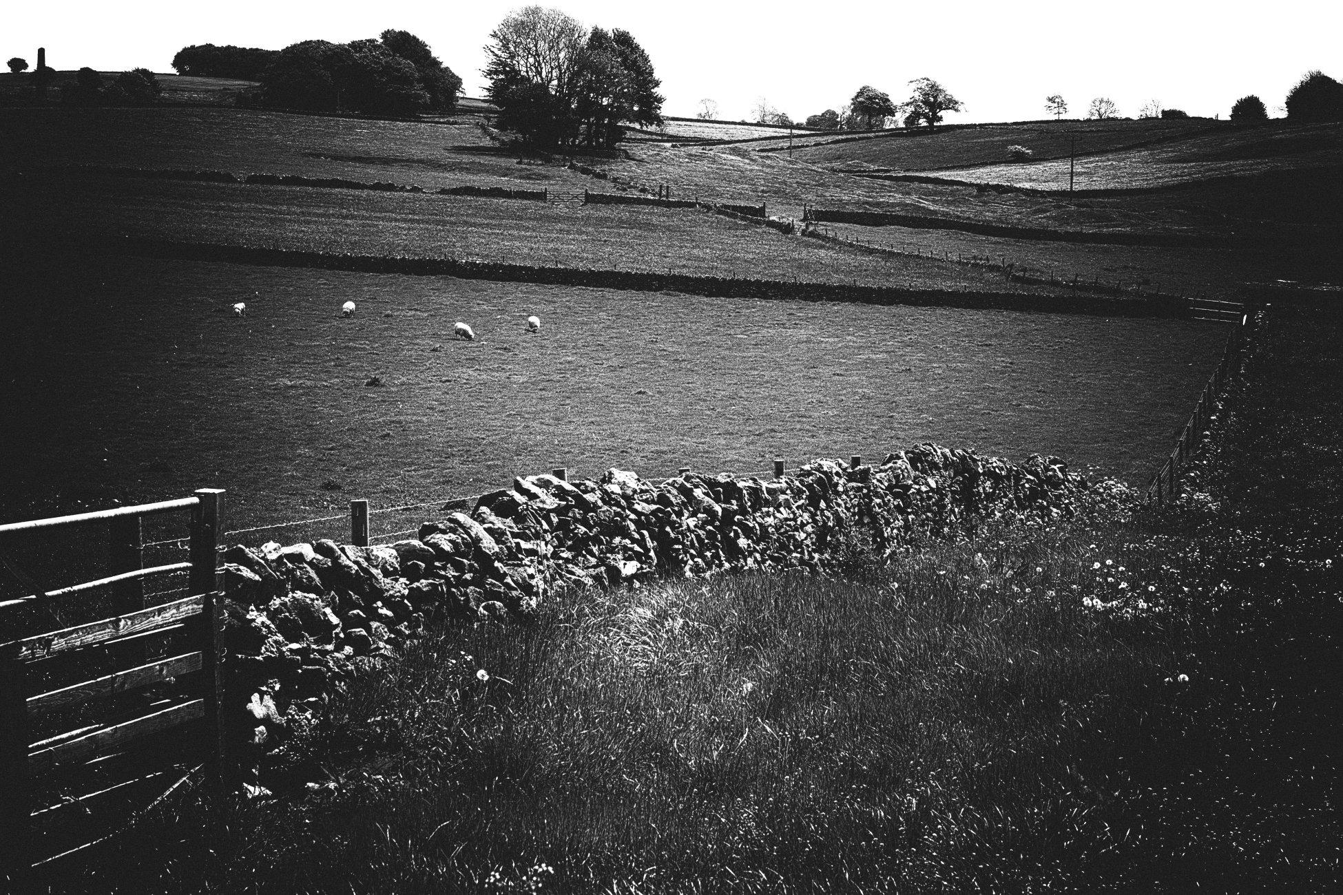 Peaky sheep
