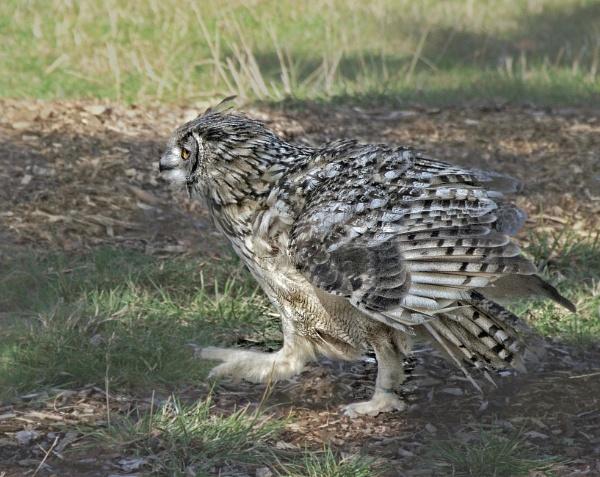Owl Alert by sweetpea62