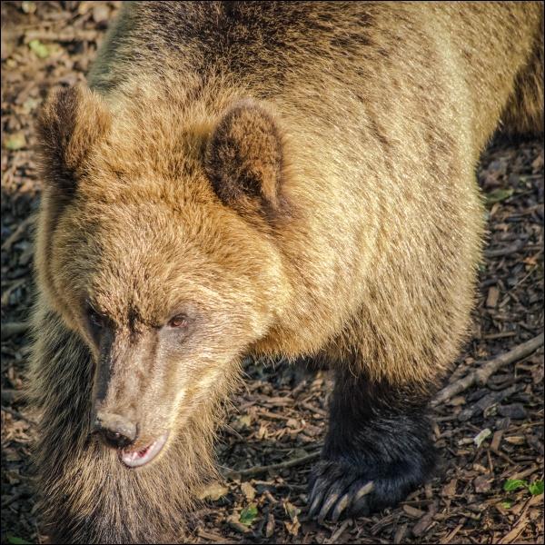 Bear (2) by Kilmas