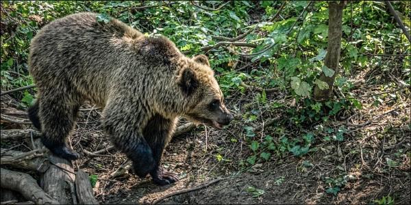 Bear by Kilmas