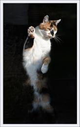 Photo : Karatekat