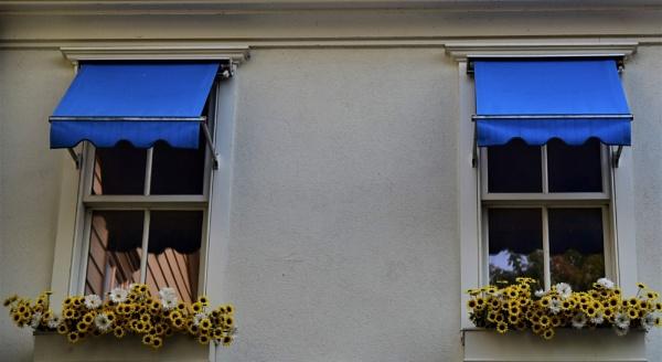 Windows by djh698