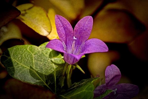 Purple by akh