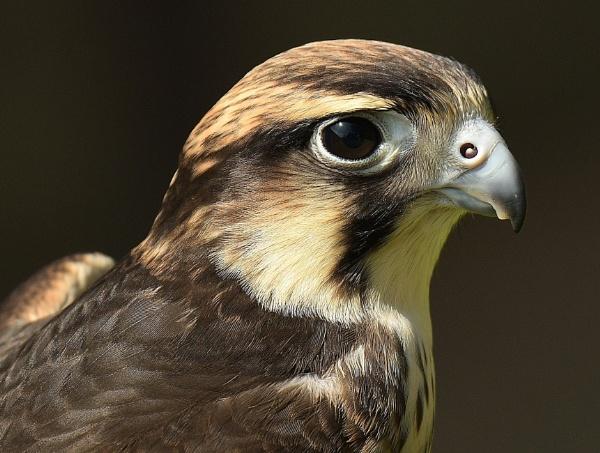 Bird portrait by nealie