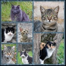 cat faces! by laura1