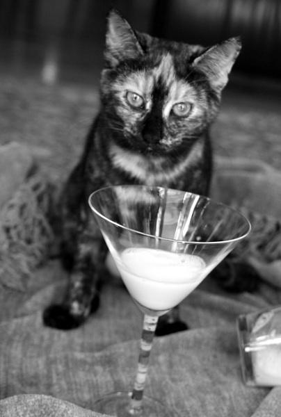 Milk.....