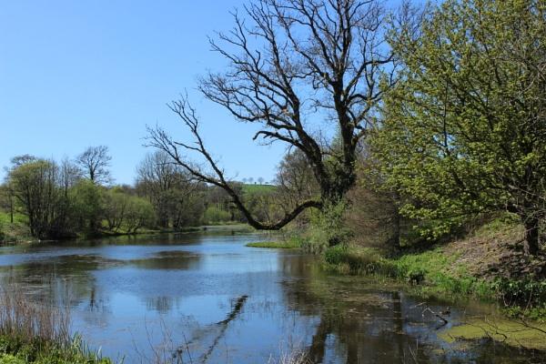 Tree reflection by carol01
